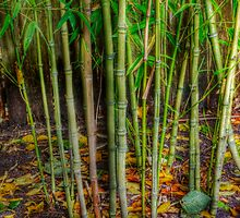 Bamboo with Autumn Leaf Confetti by Lynnette Peizer