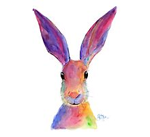HAPPY HARE 'JELLY BEAN' BY SHIRLEY MACARTHUR Photographic Print
