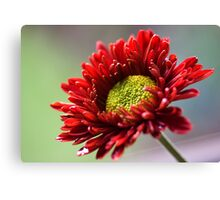 Hand Picked Canvas Print