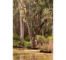 Trees at Gunbower, near Cohuna, Victoria  by Lorraine McCarthy Photographic Print