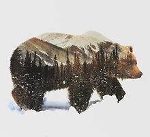 Arctic Grizzly Bear by andreaslie