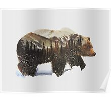 Arctic Grizzly Bear Poster