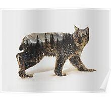 Arctic Lynx Poster