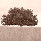 Floating tree by AzzyPants