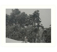 Snow burdened trees Art Print
