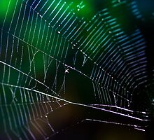 Into The Web by Jayne Le Mee