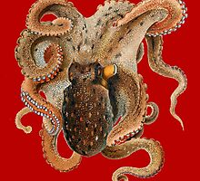 Octopus by monsterplanet