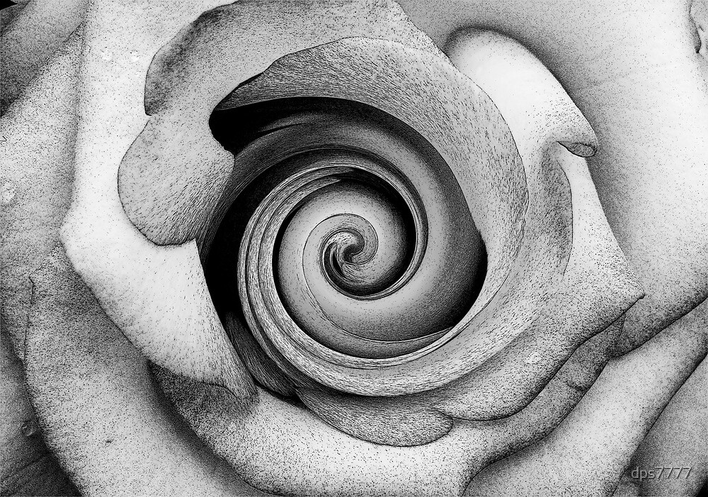 Twisted Rose by David Schroeder