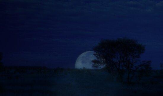 Australian Blue Moon © Vicki Ferrari by Vicki Ferrari