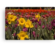 Spring at Floriade, Canberra Canvas Print