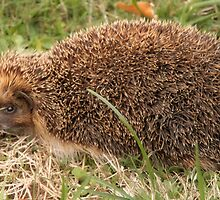 Miss Tiggywinkle comes to Lunch! by Pamela Jayne Smith