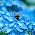 Blue Buzz by Penny Smith