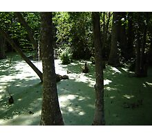 Silver Swamp Photographic Print