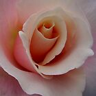 Garden Pleasures - Pastel Shades - Pink Rose by Mariaan Maritz Krog Photos & Digital Art