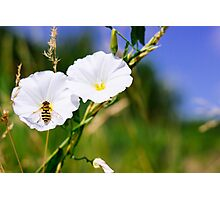 Wasp On A White Flower Photographic Print