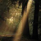 The spotlight by jchanders