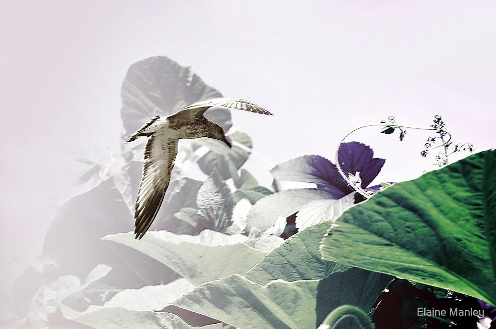 Seagull Flies  by Elaine  Manley