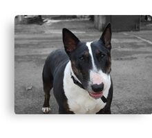 take my picture. Canvas Print