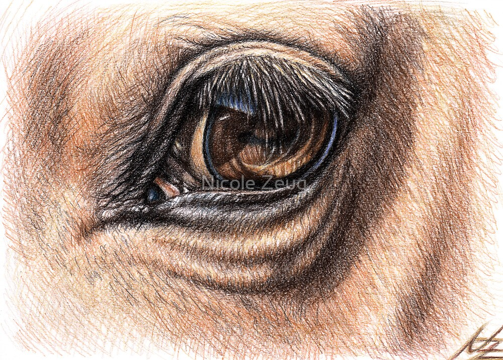 Horse Eye - Animal Detail Drawing by Nicole Zeug