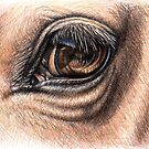 Horse Eye - Animal Detail Drawing by Nicole Zeug