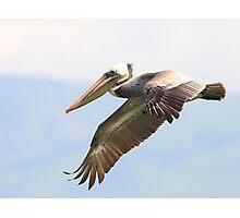 Brown Pelican in Flight 2 Photographic Print