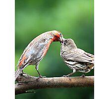 Finch Kiss Photographic Print