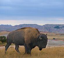 Badland's National Park / Nature Up Close by Mark Bolen