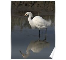 Egret in Reflection 2 Poster