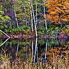 Birch Reflections by Linda Gregory