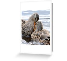 Head on collision Greeting Card