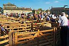 The Masham Sheep Festival by WatscapePhoto
