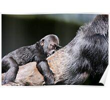Through the Eyes of Baby Gorilla Hasani Poster