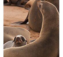 Cross seal pup Photographic Print