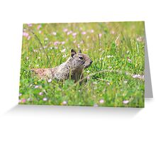 Groundhog in the Meadow Greeting Card