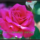 Calendar Rose - March by Carol Clifford