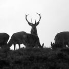 Exmoor: Keeping Watch by Rob Parsons