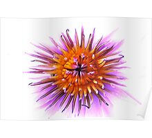 WaterLily Flower Poster