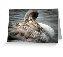 Cygnet To  Swan Greeting Card