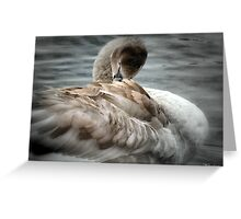 Cygnet To  Swan Greeting Card