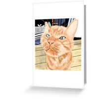 Oliver - the Sniffy Norwegian Orange Tabby Greeting Card