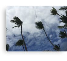 Palm in the wind! Canvas Print