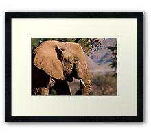 Desert elephant profile Framed Print