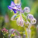 Purple Fuzzy Flower by James Zickmantel