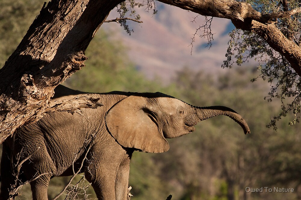Trunk hello by Owed To Nature