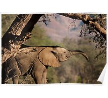 Trunk hello Poster