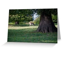 Deer May Safely Graze Greeting Card