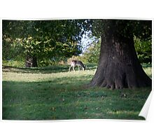 Deer May Safely Graze Poster