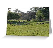 Still More Trees And Deer! Greeting Card