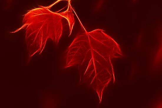 Red Leaves by Teresa Zieba