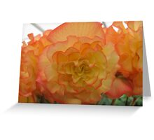 Large Orange Yellow Bloom Greeting Card